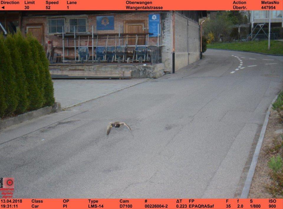 ВШвейцарии незнают, как оштрафовать быстро летящую утку