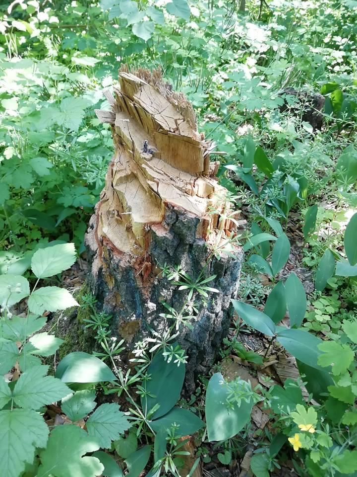 Ромы застроили землянками Голосеевский парк в Киеве: фото