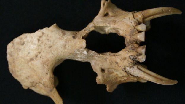 В китайской гробнице нашли останки неизвестной науке обезьяны