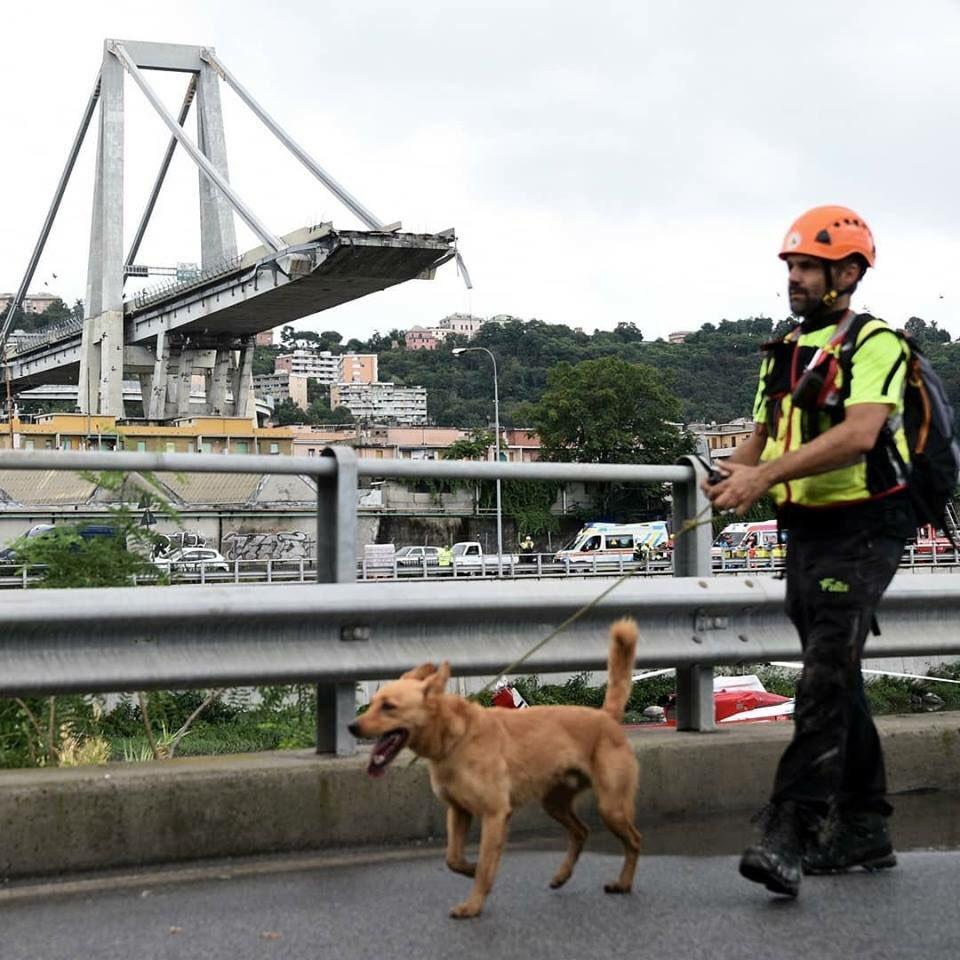 Крушение моста в Генуе: МВД Италии назвало количество погибших