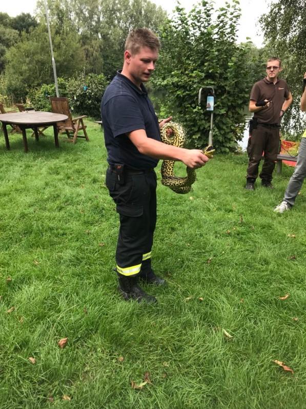 В немецком озере поймали 2,4-метровую анаконду: фото