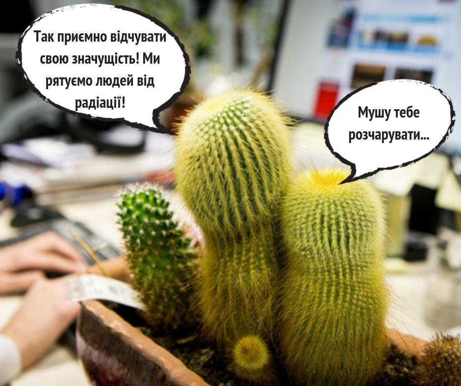 Нужен ли кактус возле компьютера - Супрун развеяла еще один миф