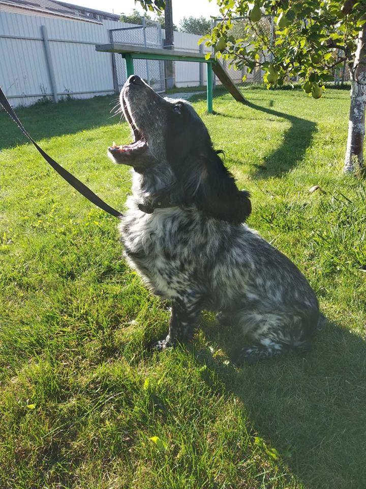 "В ""Борисполе"" собака нашла в багаже 5 кг кокаина: видео"