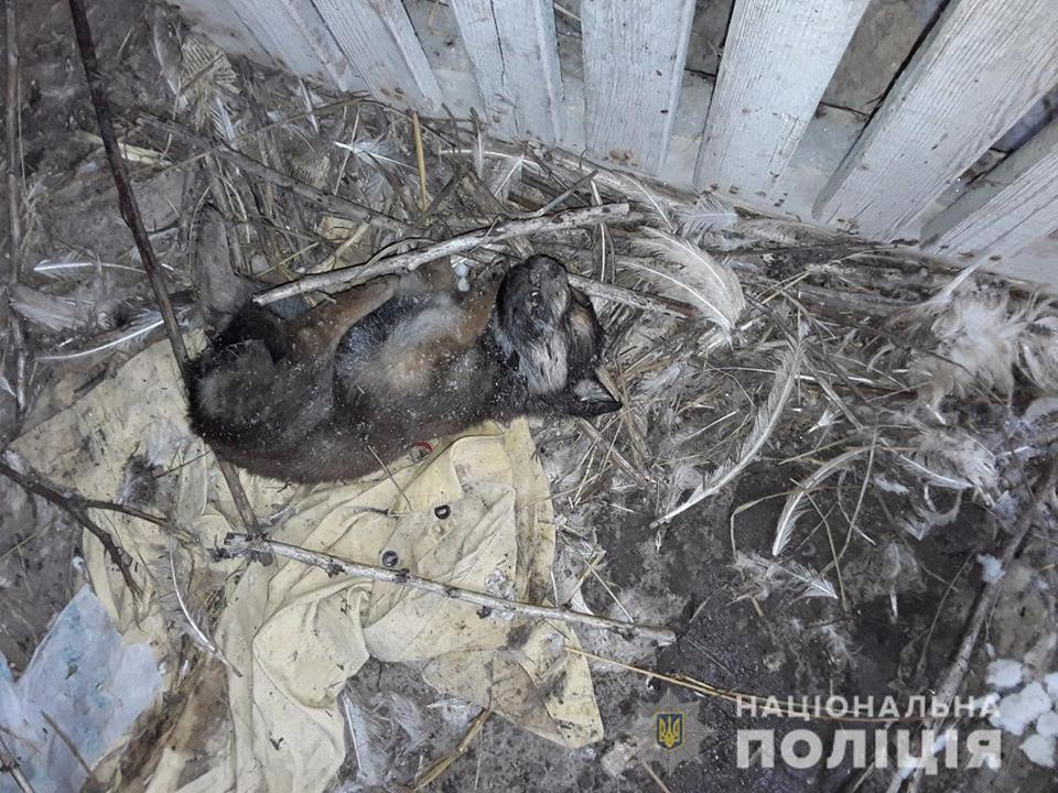 Под Киевом псевдоволонтеры жестоко убивали животных - полиция