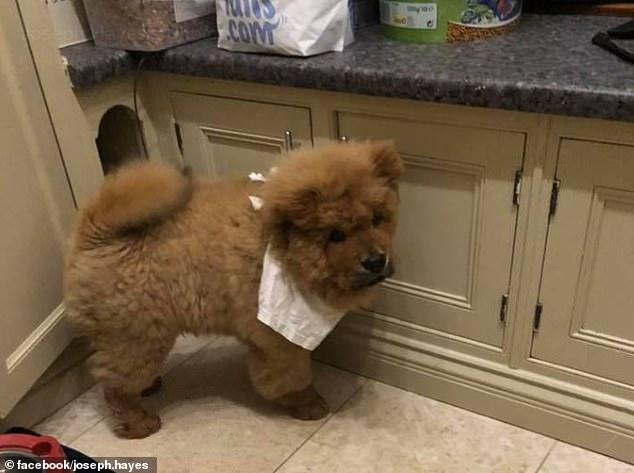 В Великобритании арестовали щенка-миллионера, вытягивал адвокат