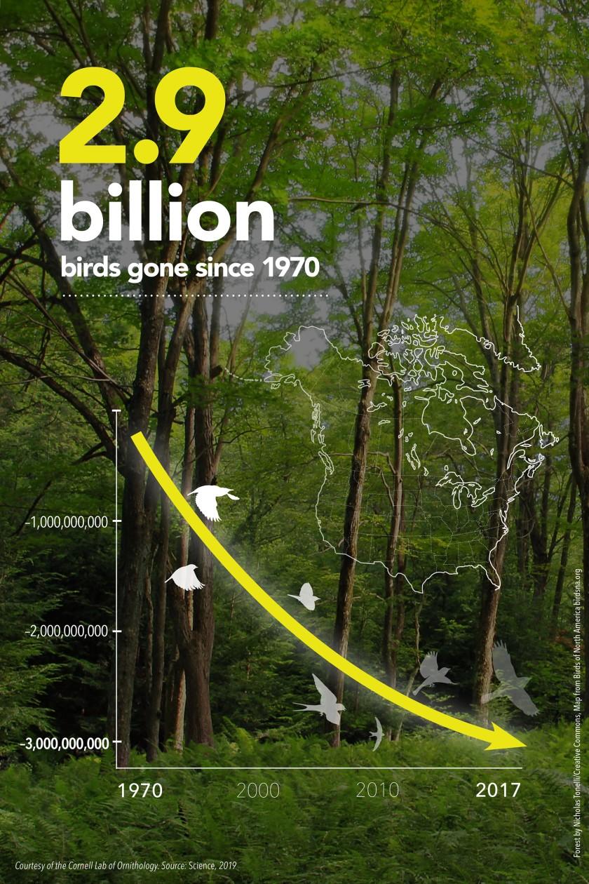 С 1970 года в Северной Америке исчезло 3 млрд птиц - ученые
