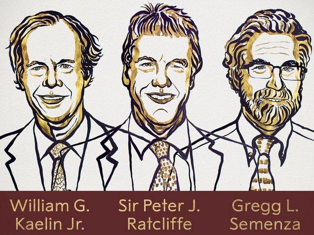 Нобелевскую премию по медицине получили трое: что исследовали
