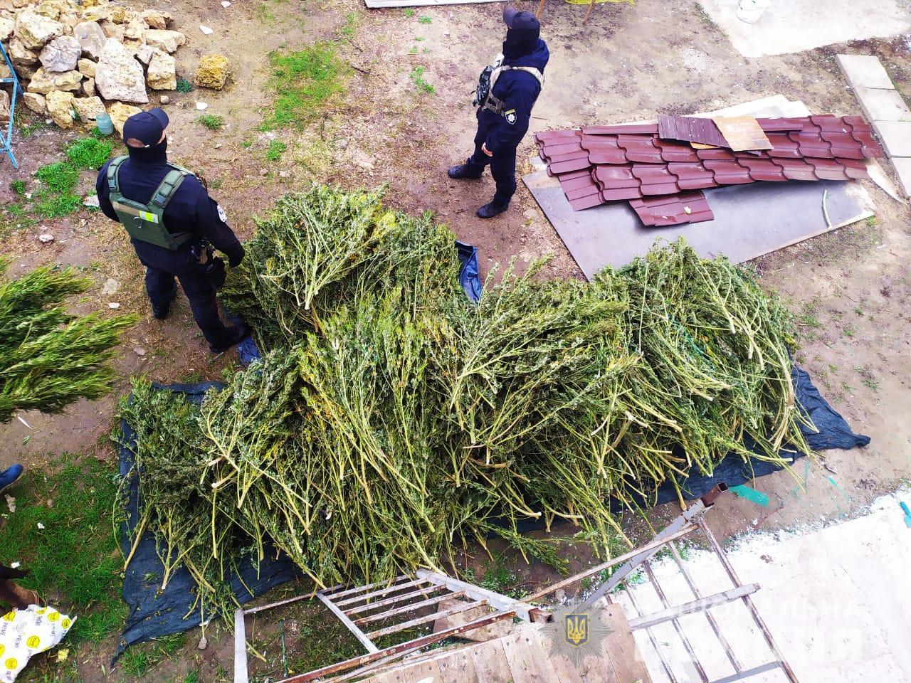 В Херсоне полицейские изъяли у зятя и тестя 60 кг марихуаны: фото