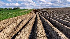Каким будет рынок земли и когда его запустят. Слуги народа обнародовали детали