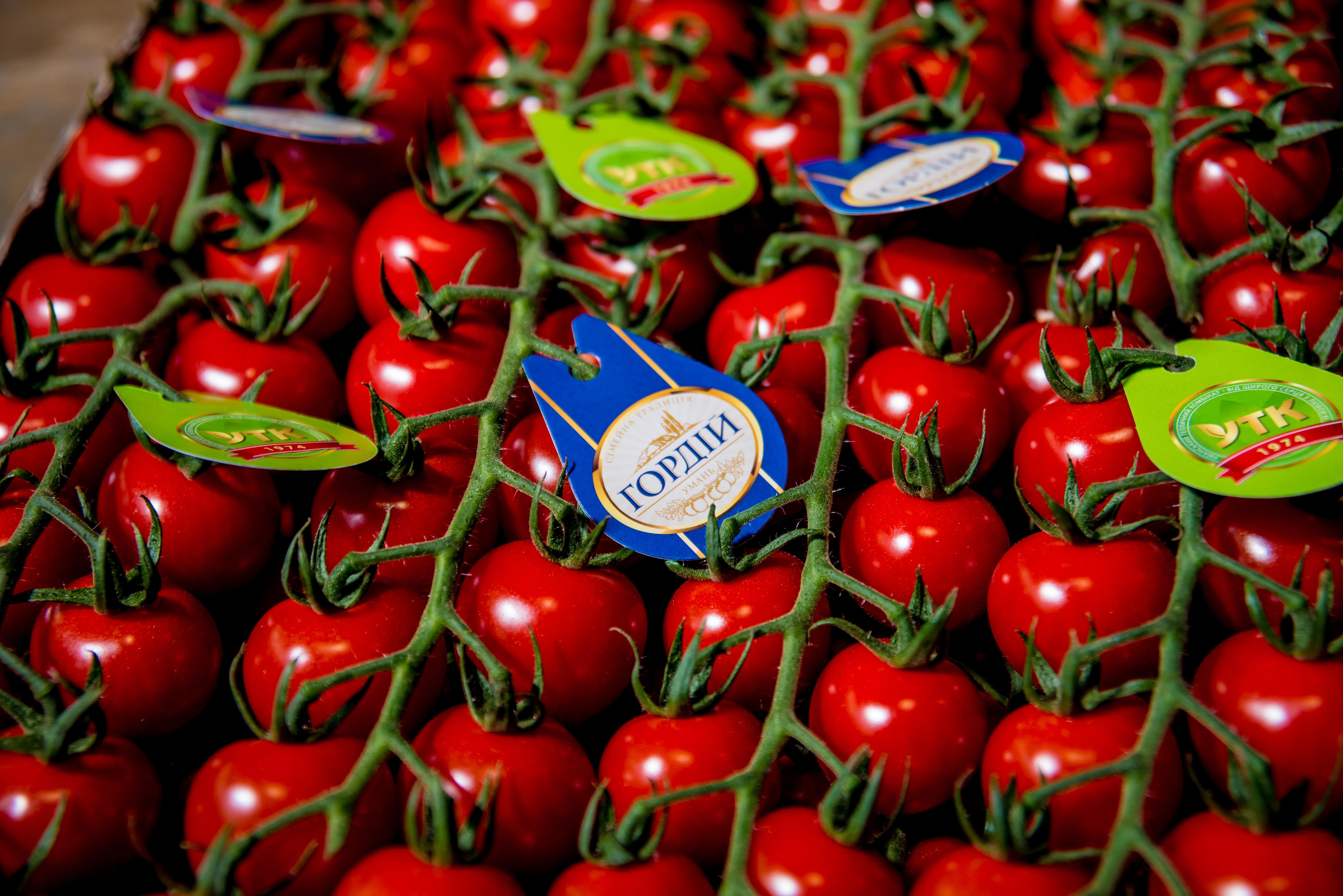 Тепличные помидоры и огурцы не отличаются от сезонных