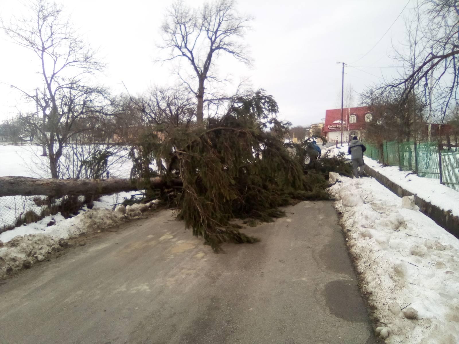 На Прикарпатті вітер зносить дахи і валить дерева: фото, відео