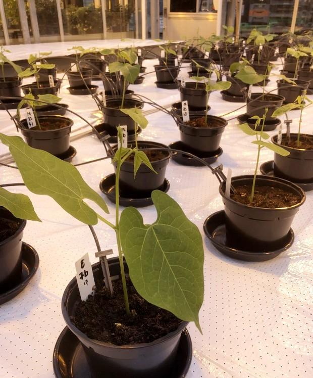Сечу можна буде використовувати як добриво для рослин на Марсі: дослідження