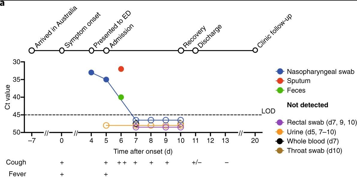 Как иммунитет реагирует на коронавирус, исследование ученых: фото