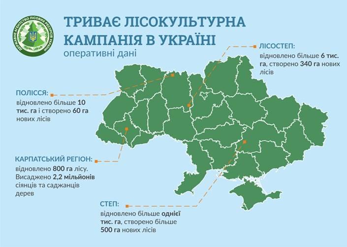 Инфографика Госагентства лесных ресурсов