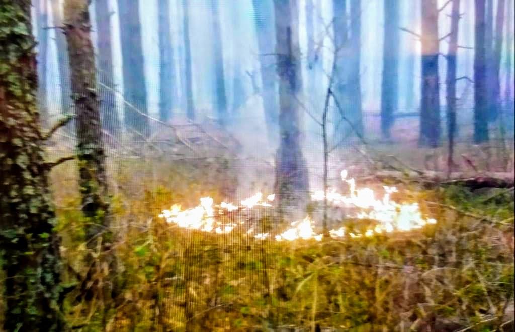 Поджоги в лесах. Нацгвардия начала антидиверсионную операцию - Аваков