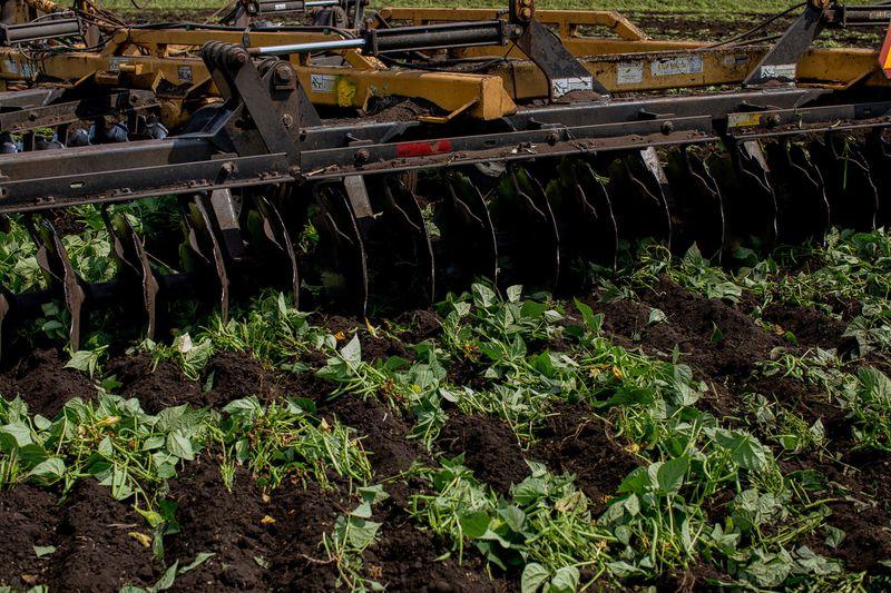 Тонны гнилых овощей: фермеры по всему миру выбрасывают урожай - фоторепортаж