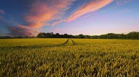 С 1 июля в Украине открывается рынок земли — новости Украины,