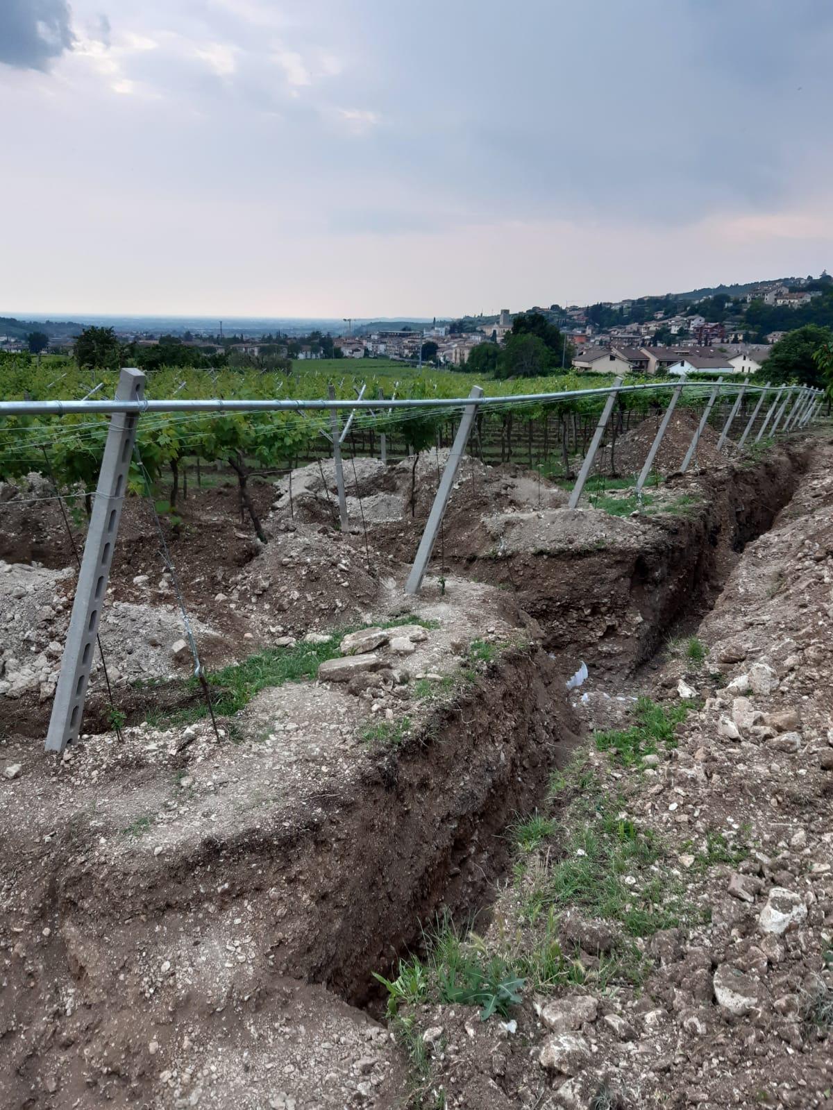 Під виноградником в Італії знайшли давньоримську підлогу з мозаїки: фото