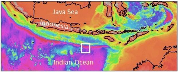 Осьминоги Дамбо замечены на рекордной глубине