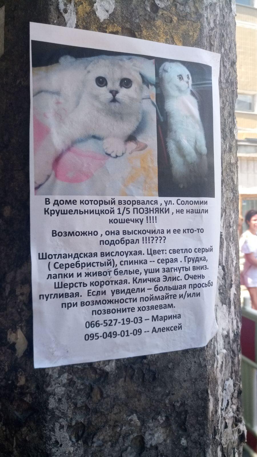 В завалах дома на Позняках через две недели после взрыва нашли кошку: фото