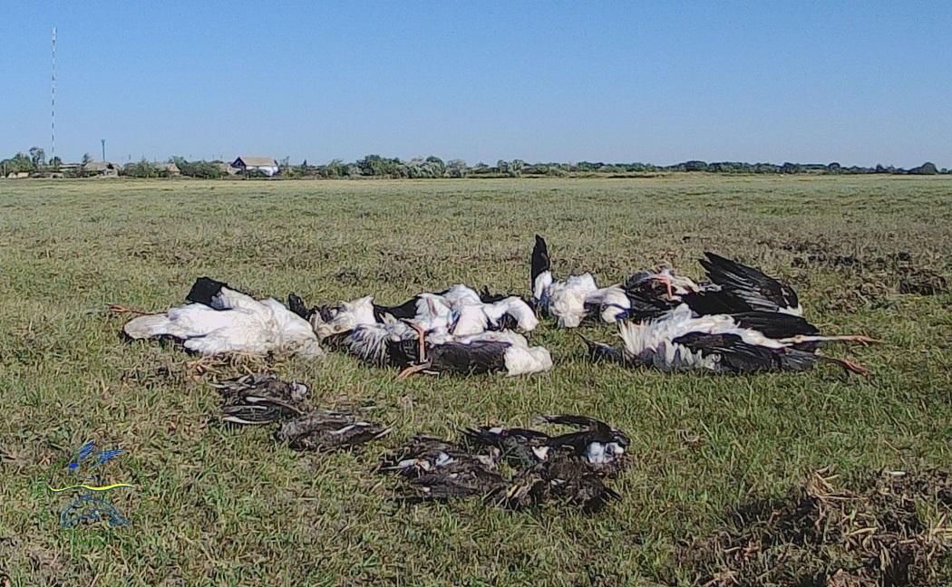 Погибшие птицы (facebook.com_rusevivan)