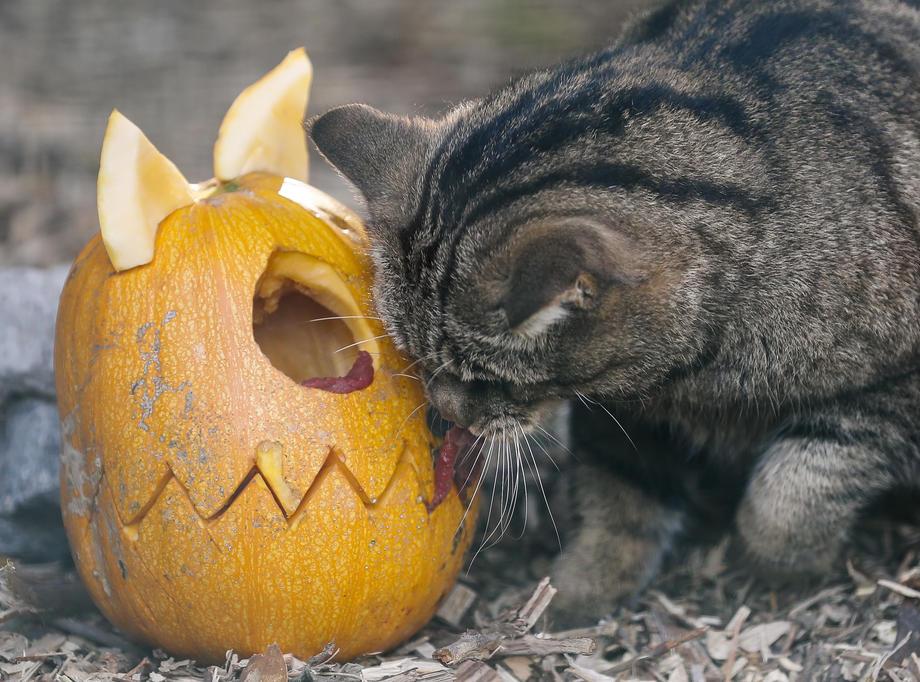 В зоопарке Киева животным устроили Хэллоуин – видео и фото