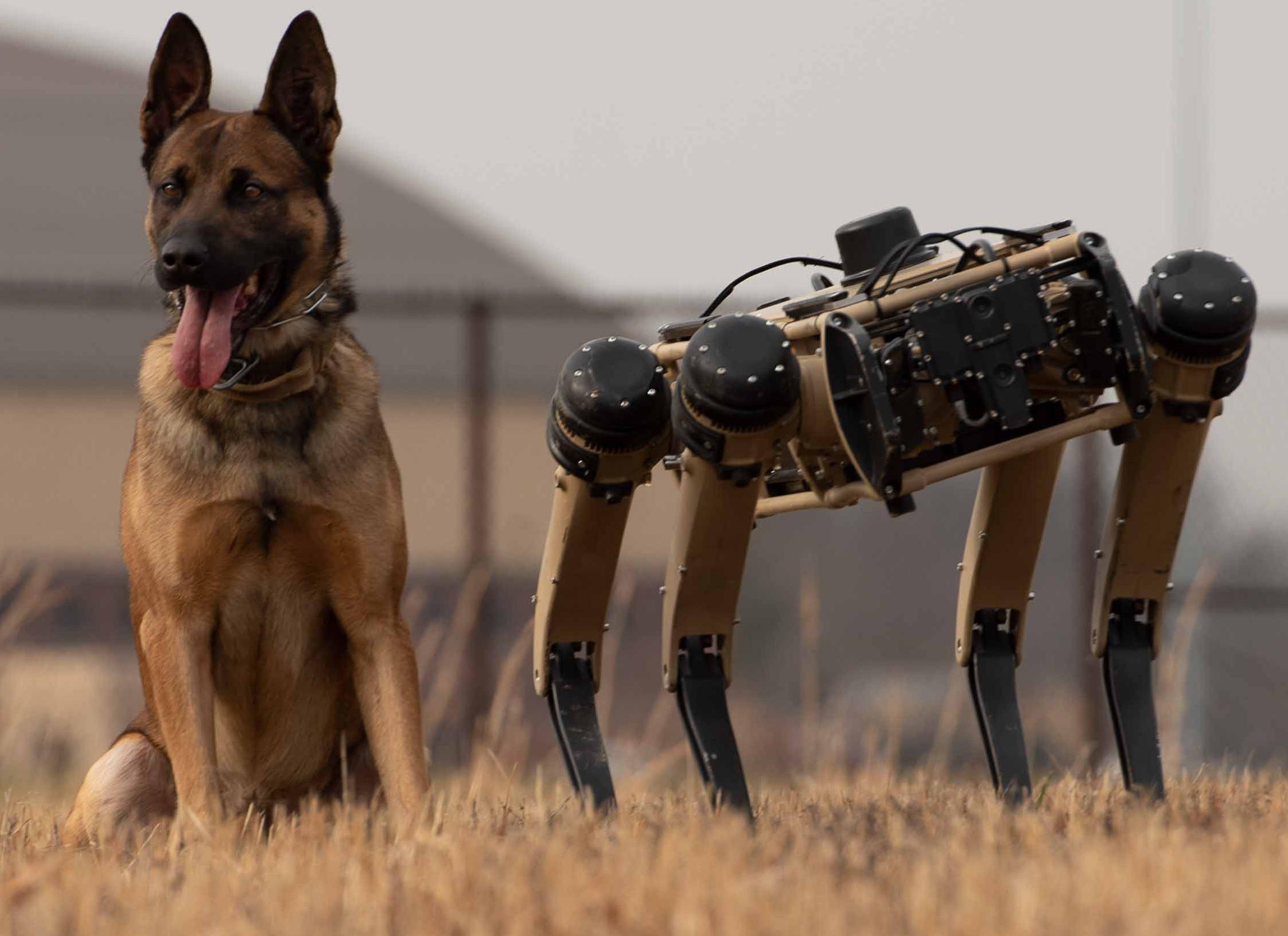 Фото: US Air Force / Ghost Robotics