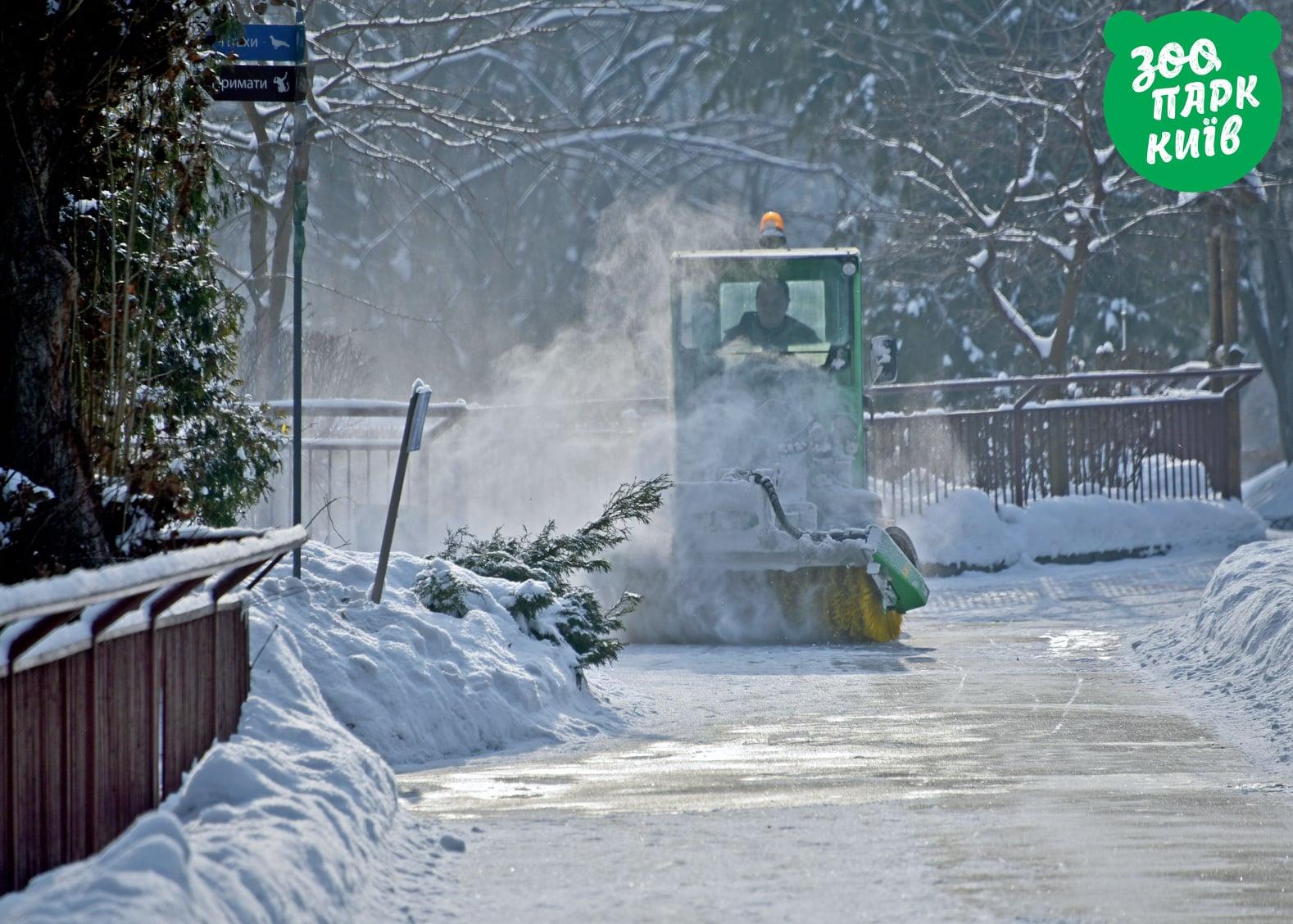 Тигры и верблюды в снегу. Зоопарк Киева показал реакцию животных на непогоду – фото