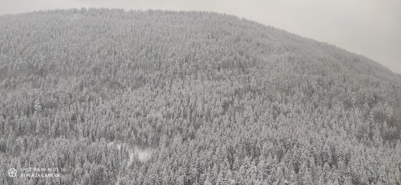 """В Карпатах девятые сутки ищут лыжника: к поискам привлекли """"Супер пуму"""" – фото, видео"""
