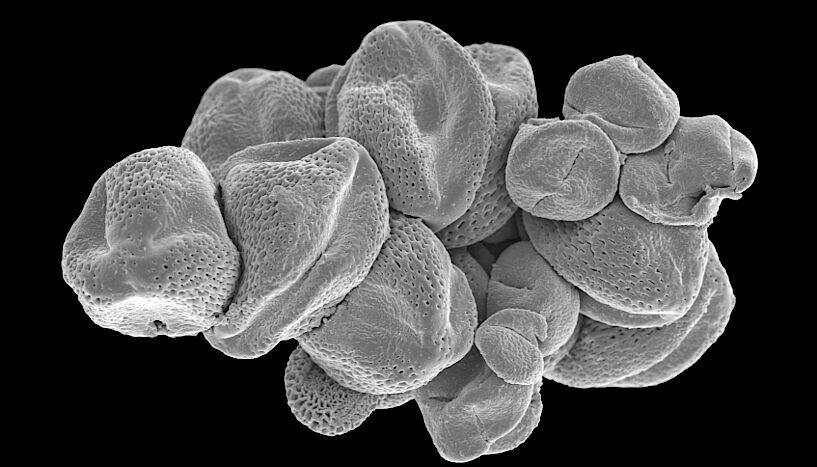Ученые впервые исследовали содержимое желудка мухи возрастом 47 млн лет: фото