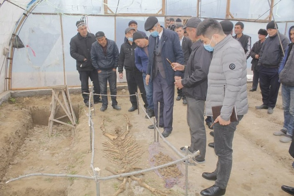 В Узбекистане фермер копал яму под теплицу, а нашел скелет древнего носорога – фото
