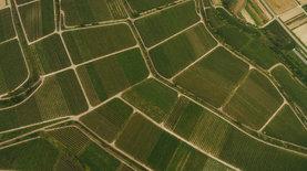 Верховная Рада приняла законопроект о продаже земли через электро…