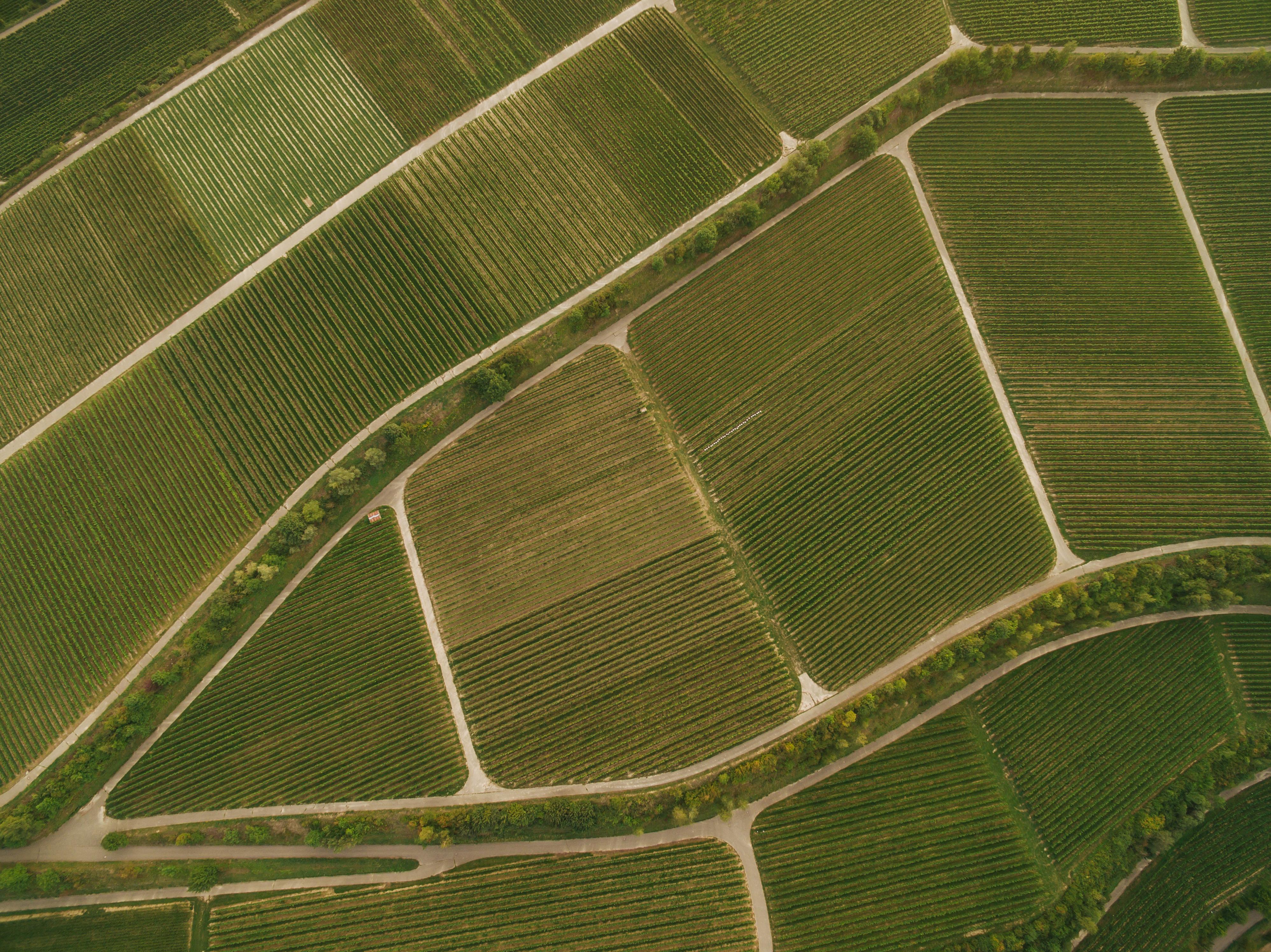 Как продать землю выгодно: создан онлайн-помощник LandInvest для землевладельцев