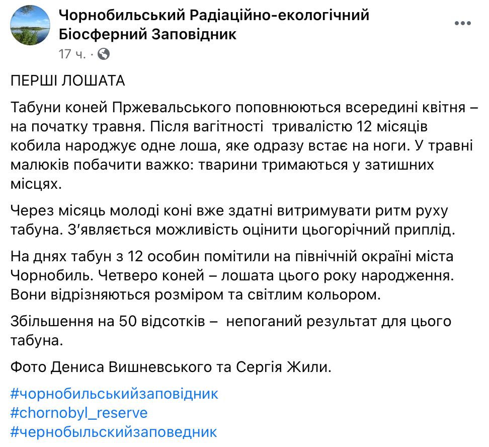 #новости   Под Чернобылем заметили табун уникальных коней Пржевальского – у них пополнение: фото - новости Украины, Общество