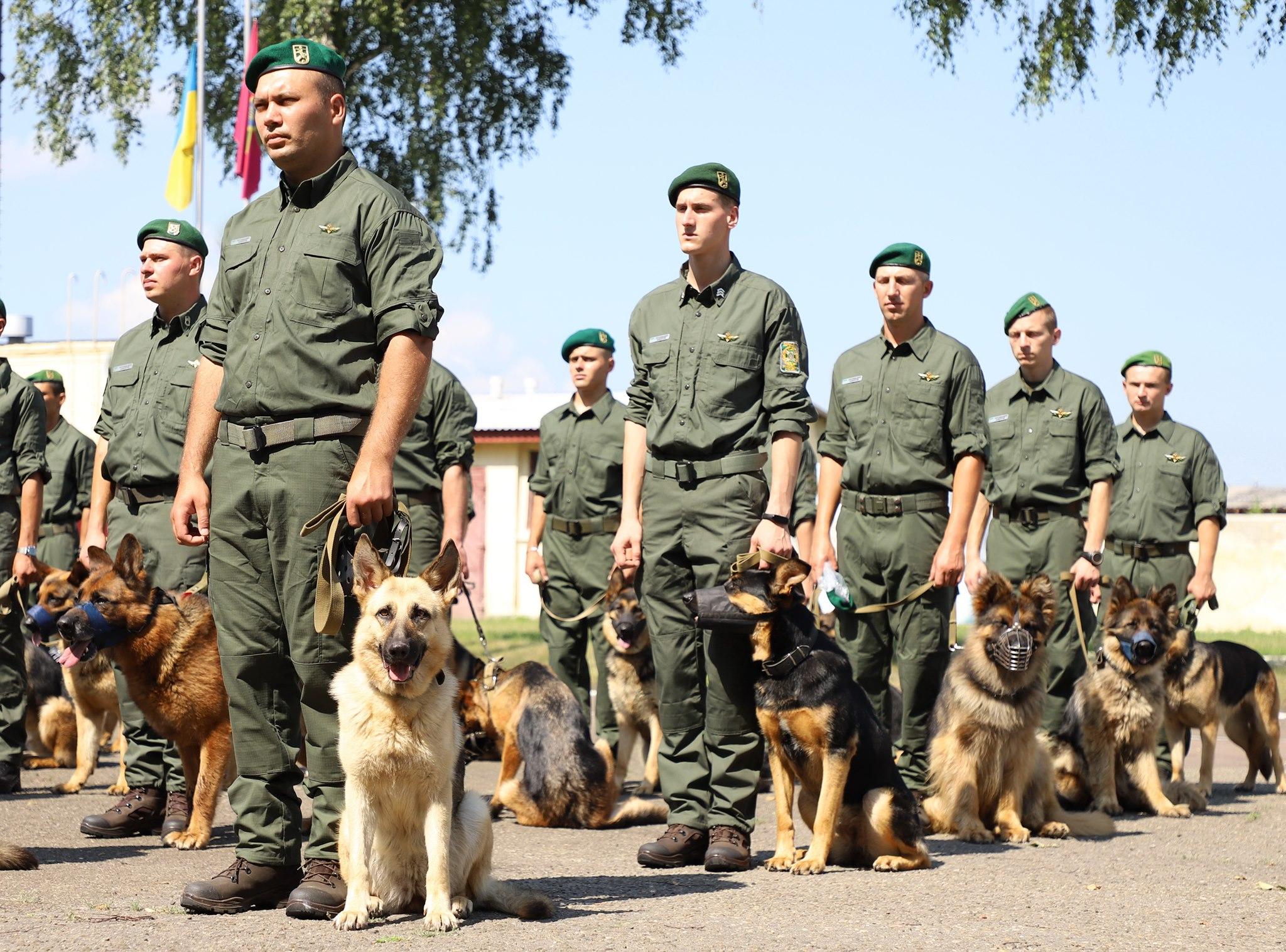 Собаки пограничников впервые пройдут в параде ко Дню независимости. Уже репетируют: фото