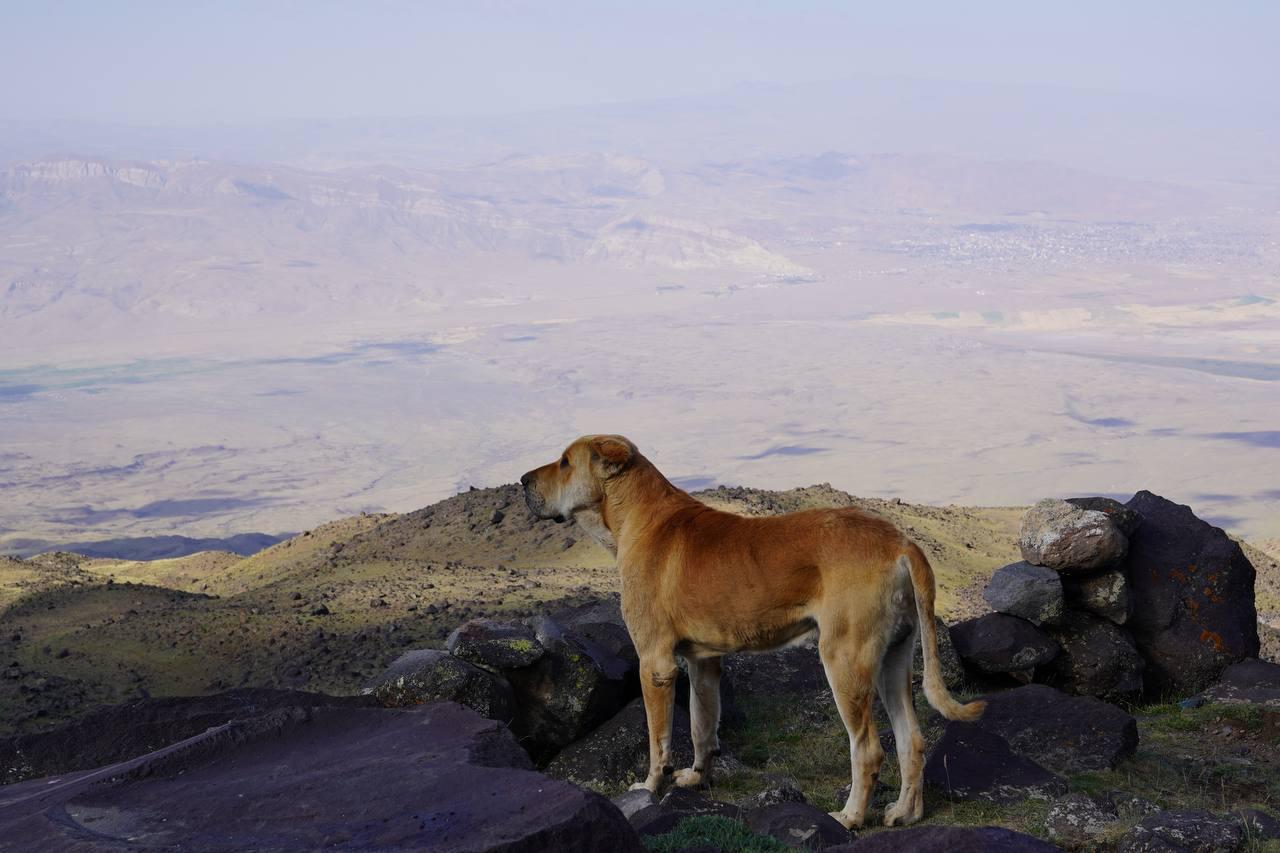 Страх і ненависть на Арараті. Як я став туристом. Розповідь головного редактора LIGA.net