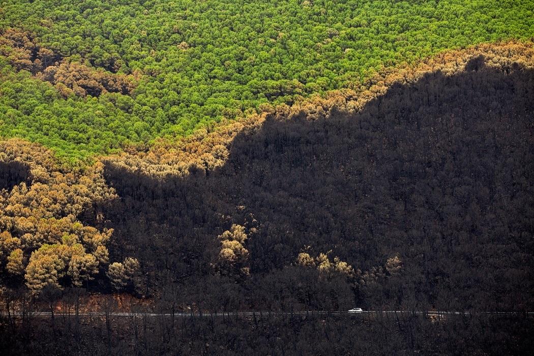 Выгоревший и уцелевший лес с высоты птичьего полета, Малага (Фото: Daniel Perez/ЕРА)
