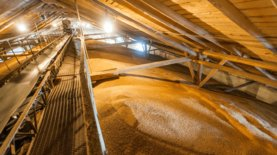 Минэкономики назначило нового главу зерновой госкорпорации