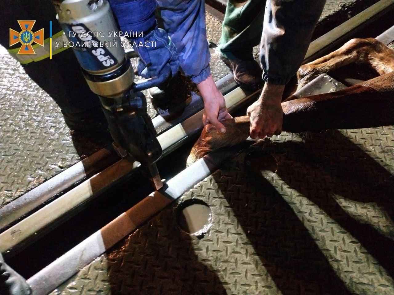 Остановили поезд. В Волынской области ГСЧС спасла коня, который застрял копытом в рельсах