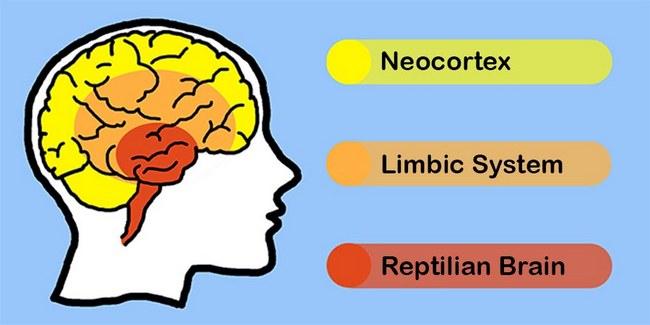 triune-brain-diagram.jpg