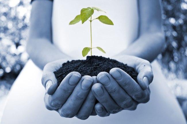 seed growing ideas.jpg