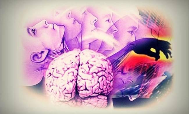 Нейронаука Галло.jpg