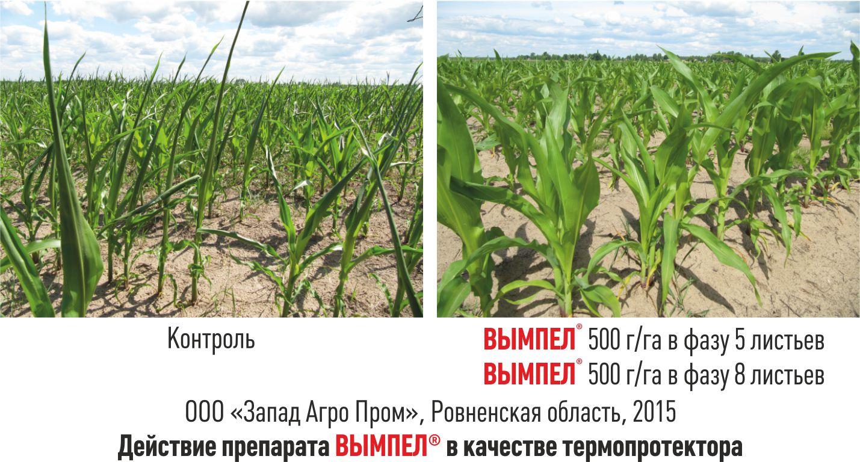 Как гарантированно получить прибыль в сельском хозяйстве?