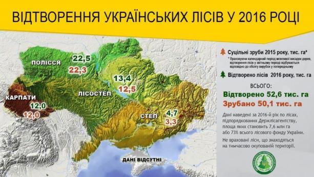 В Украине высадили на 5% больше лесов, чем срубили: инфографика