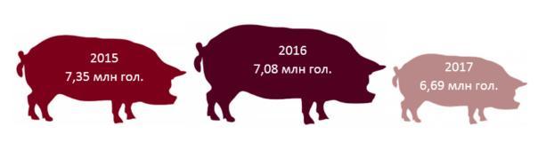 Поголовье свиней в Украине сократилось на 5,5%: инфографика