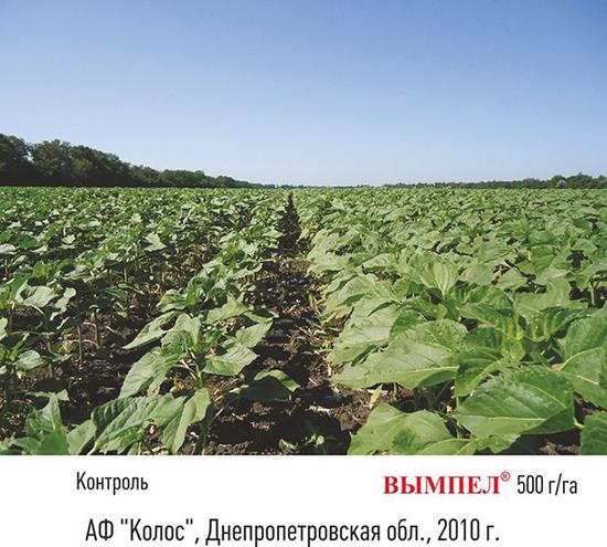 Преодолеть кризис для сельхозпроизводителя и получить прибыль