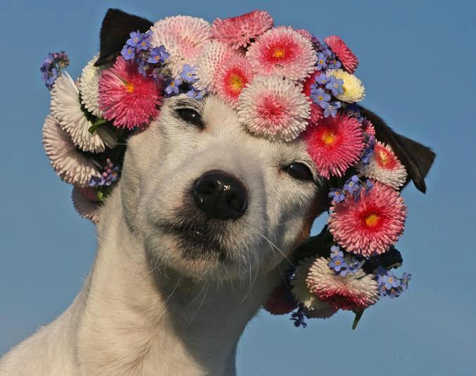 doggy_babe.jpg