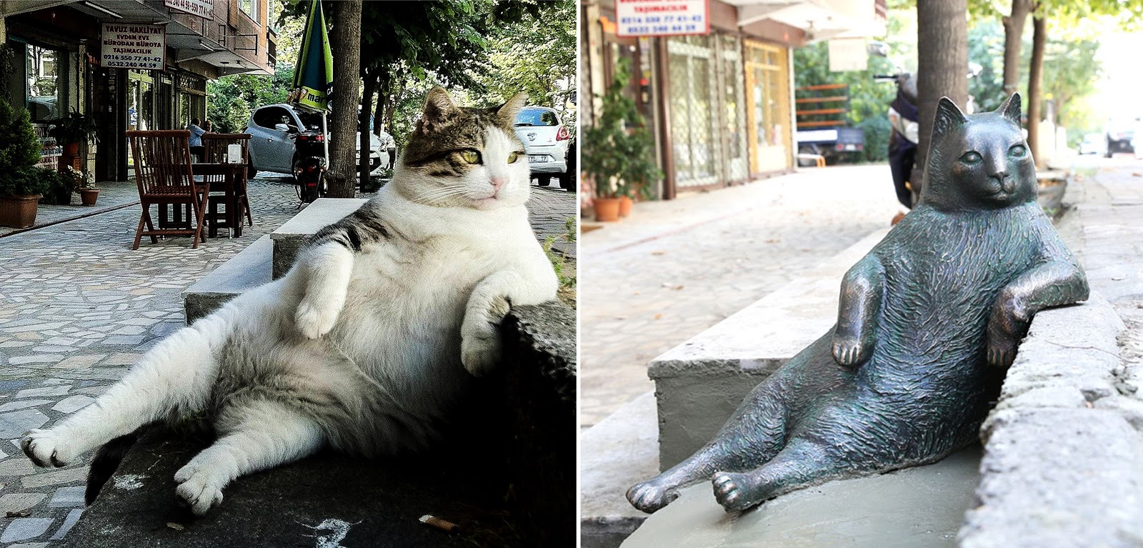 Украденный памятник стамбульской кошке Томбили вернули на место