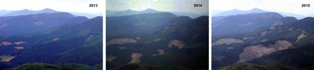 Туристы показали масштабы вырубки леса