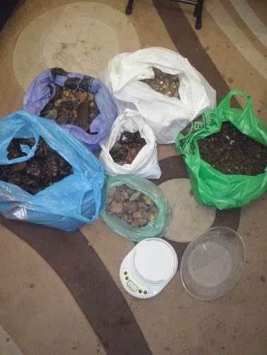 На Ровенщине СБУ изъяла незаконно добытого янтаря на 1,2 млн грн